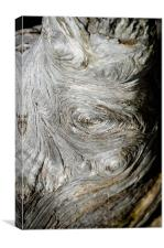 WOODEN FINGERPRINT eddies in the grain of an old log like whorls on a finger, Canvas Print