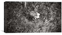 Black & White Flower, Canvas Print