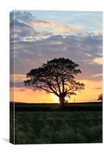 Shropshire Sunset, Canvas Print