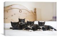Kittens, Canvas Print