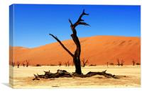 Dead Vlei Tree  , Canvas Print