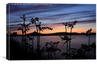 Fern Sunset , Canvas Print