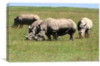 Group Of White Rhino , Canvas Print