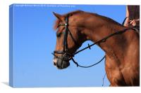 Chestnut Mare , Canvas Print
