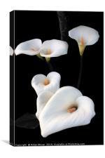 Lilies , Canvas Print