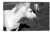 White Horse , Canvas Print