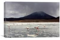 Flamingo's On A Salt Lake, Bolivia , Canvas Print
