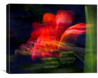 Wind-blown Crocosmia, Canvas Print