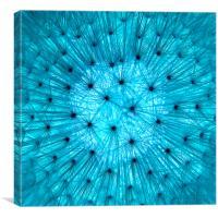 Dandelion in Blue, Canvas Print
