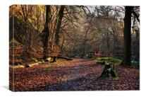 Woodland at Hardcastle Crags, Canvas Print