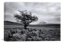 The hardy tree, Canvas Print