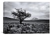 The hardy tree, Canvas Print