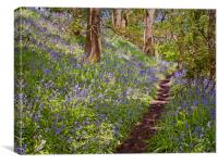 spring woodland, Canvas Print