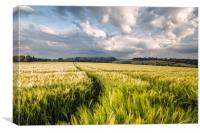 Barley Fields, Canvas Print