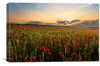 Poppy Fields, Canvas Print
