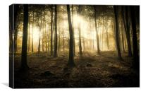 Kings Wood in Autumn, Canvas Print