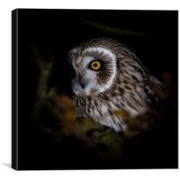 Short Eared Owl - portrait, Canvas Print
