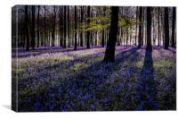 Kings Wood Bluebells, Canvas Print