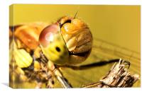 Smiling Dragonfly Portrait, Canvas Print