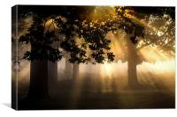 Richmond Park London, Canvas Print