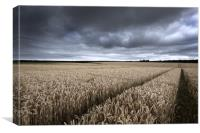 Stormy Cornfields, Canvas Print