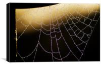 Cobweb Dew, Canvas Print