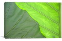 Green Abstract No. 3, Canvas Print