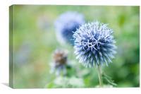 Blue Globe Thistle Flower, Canvas Print