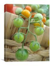 cherry tomatos, Canvas Print