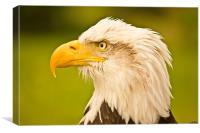 Eagle eye, Canvas Print