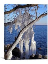 Iced Tree, Canvas Print