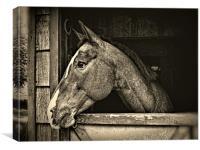 A Horse Of Course - Mono, Canvas Print