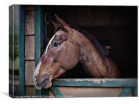 A Horse Of Course - Retro, Canvas Print