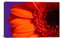 Orange Gerbera Macro, Canvas Print