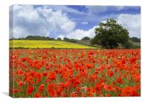 Poppies vs Rape Field, Canvas Print