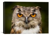 Eagle Owl Stare, Canvas Print