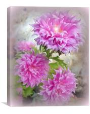 Pink Asters 2, Canvas Print
