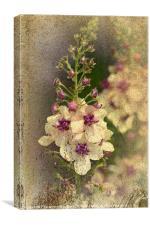 Florals, Canvas Print