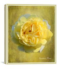 Summer Rose, Canvas Print
