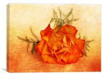 Peachy, Canvas Print