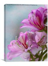 Pink Delight 1, Canvas Print