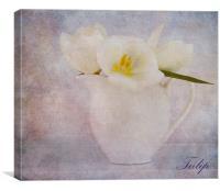 Tulip, Canvas Print