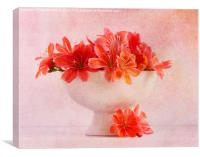 Lewisia (2)...Pretty as a picture (4), Canvas Print