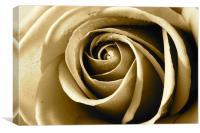 Sepia Rose, Canvas Print