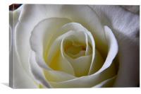 Classic Rose, Canvas Print