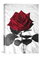 Red Velvet Rose, Canvas Print