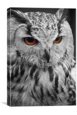 Hunters Eyes, Canvas Print