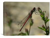 The Dragon fly, Canvas Print