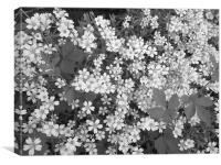 Carpet of Black & White, Canvas Print