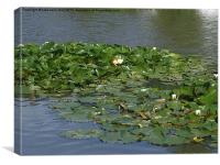 Lilly Pads on the Water, Canvas Print